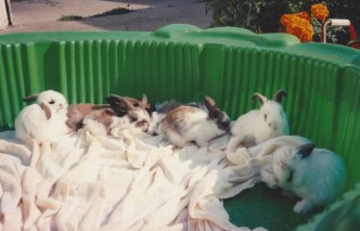 Rabbits 4
